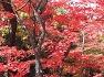 북한산 노적봉의 가을을 위문에서바라보다