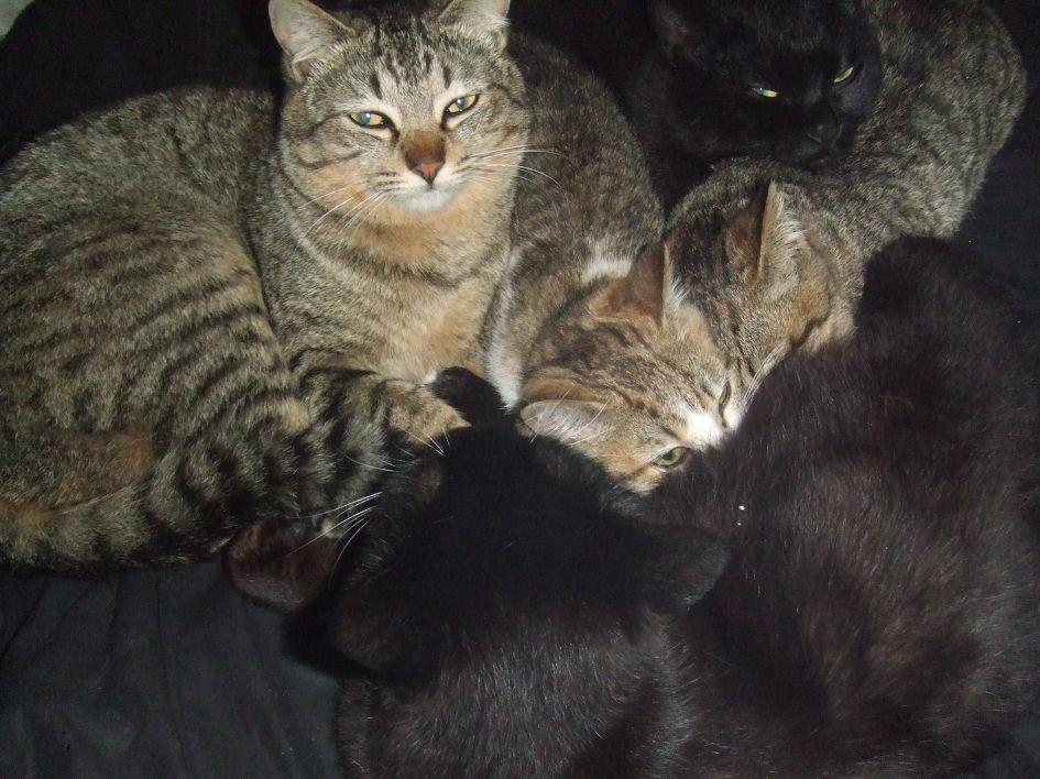어느 고양이들의 죽음 앞에서