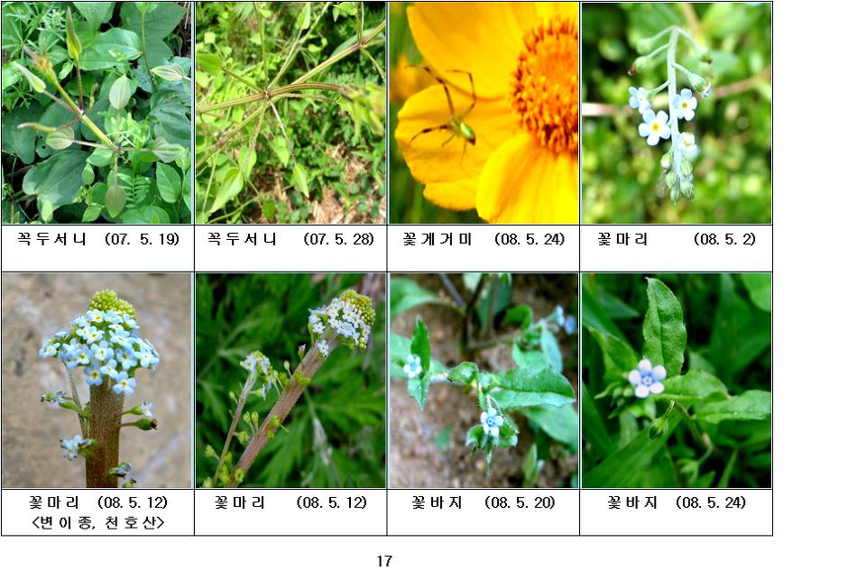 봄에 피는 야생화(5월-5)