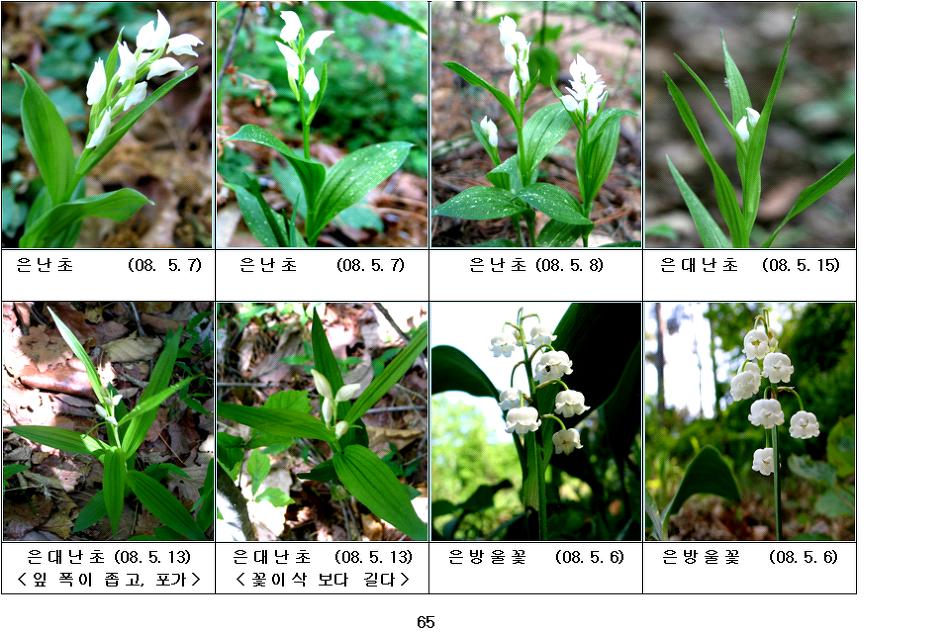 봄에피는 야생화(5월-17)