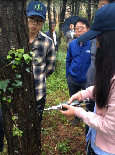서정용기자/재선충병 걸린 소나무 방재 천적 투입 '살리기' 성공